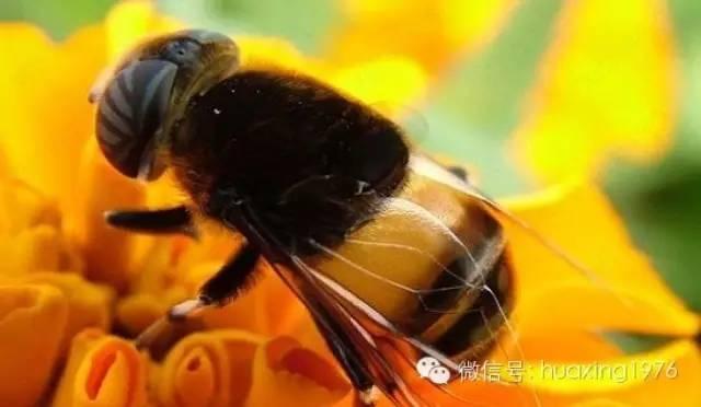 蜂产品,我们还能享受多久?蜂群神秘消失—元凶到底是谁?
