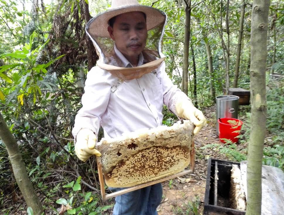 蜂蜜 浓缩蜜 超市蜜 原蜜 蜂蜜的作用 蜂蜜养生