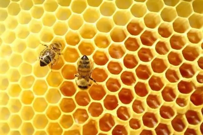 蜂胶中的美容养颜成分