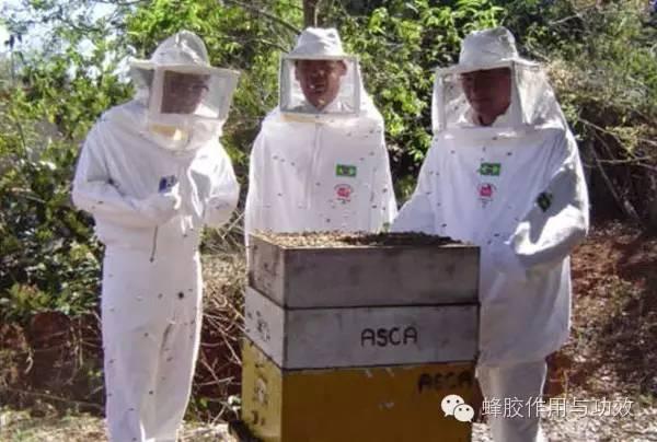 【国家地理杂志揭秘】巴西蜂胶科学的采集和萃取工艺(上篇)