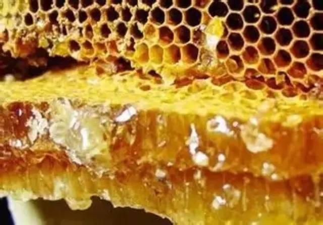 蜂胶——人类发现的最伟大天然物质!