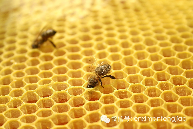 照片为证,源自江阿姨的蜂胶比对试验