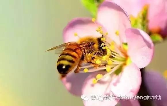 喝了这么久的蜂蜜,竟不知道这些蜂蜜小知识!