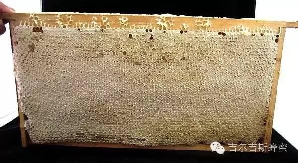 """成熟蜂蜜与非成熟蜂蜜之间的秘""""蜜"""",差别不是一点点!"""