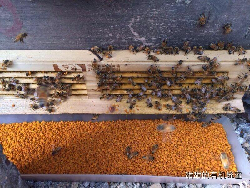 浓缩的天然药库——蜂花粉!(下)
