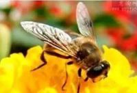 蜂蜜对肌肉的恢复作用