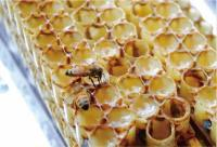 10个蜂蜜小知识99.9%的人看完都会收藏