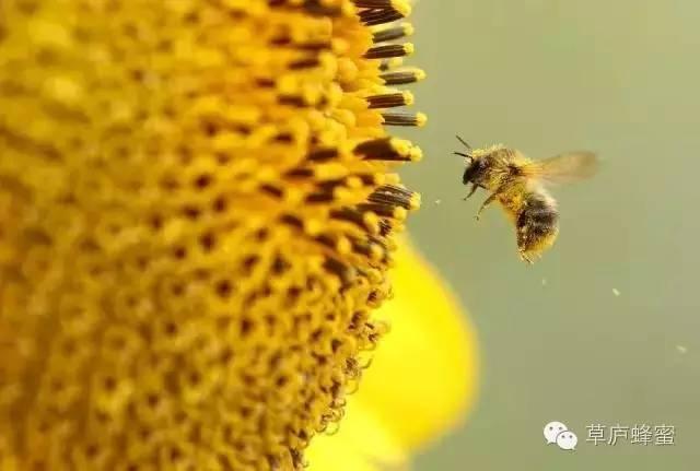 关于花粉,你了解多少?
