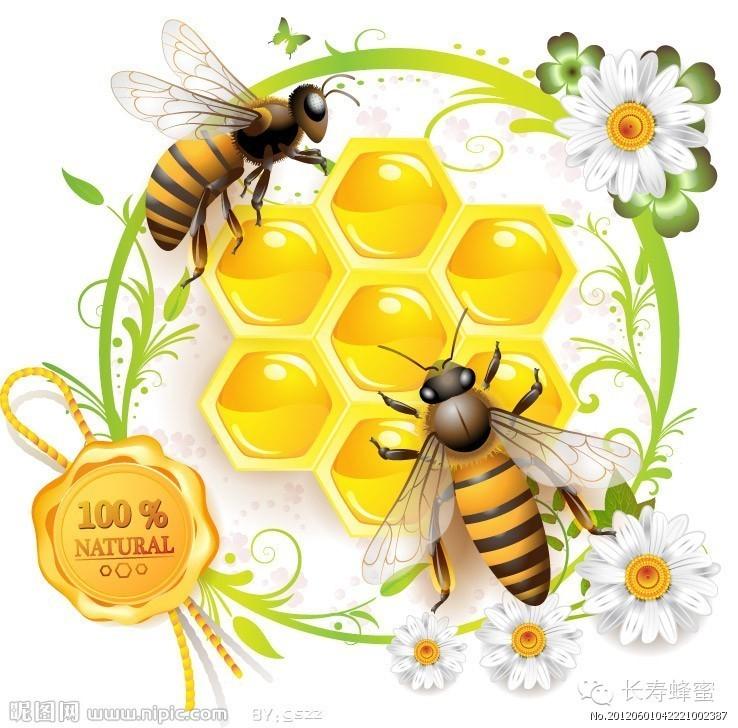 详细解读蜂蜜的几大养生功效