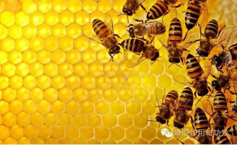蜂胶食用细节上的技巧与忌讳,你都知道哪些?