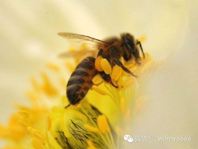 蜂王浆防癌治癌临床大显身手