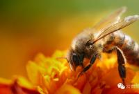 寻觅花海归来,把收获留在养蜂人的梦里