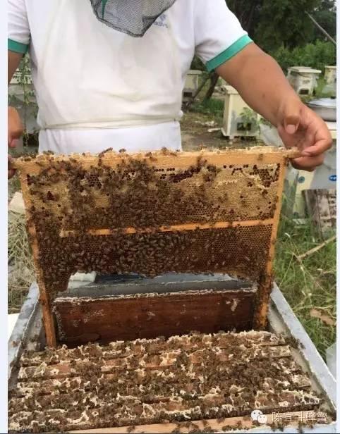 天然蜂巢蜜,嚼着吃的蜂蜜!