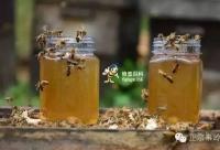 真相:蜂蜜到底不能润肠通便?(招1级代理3名)