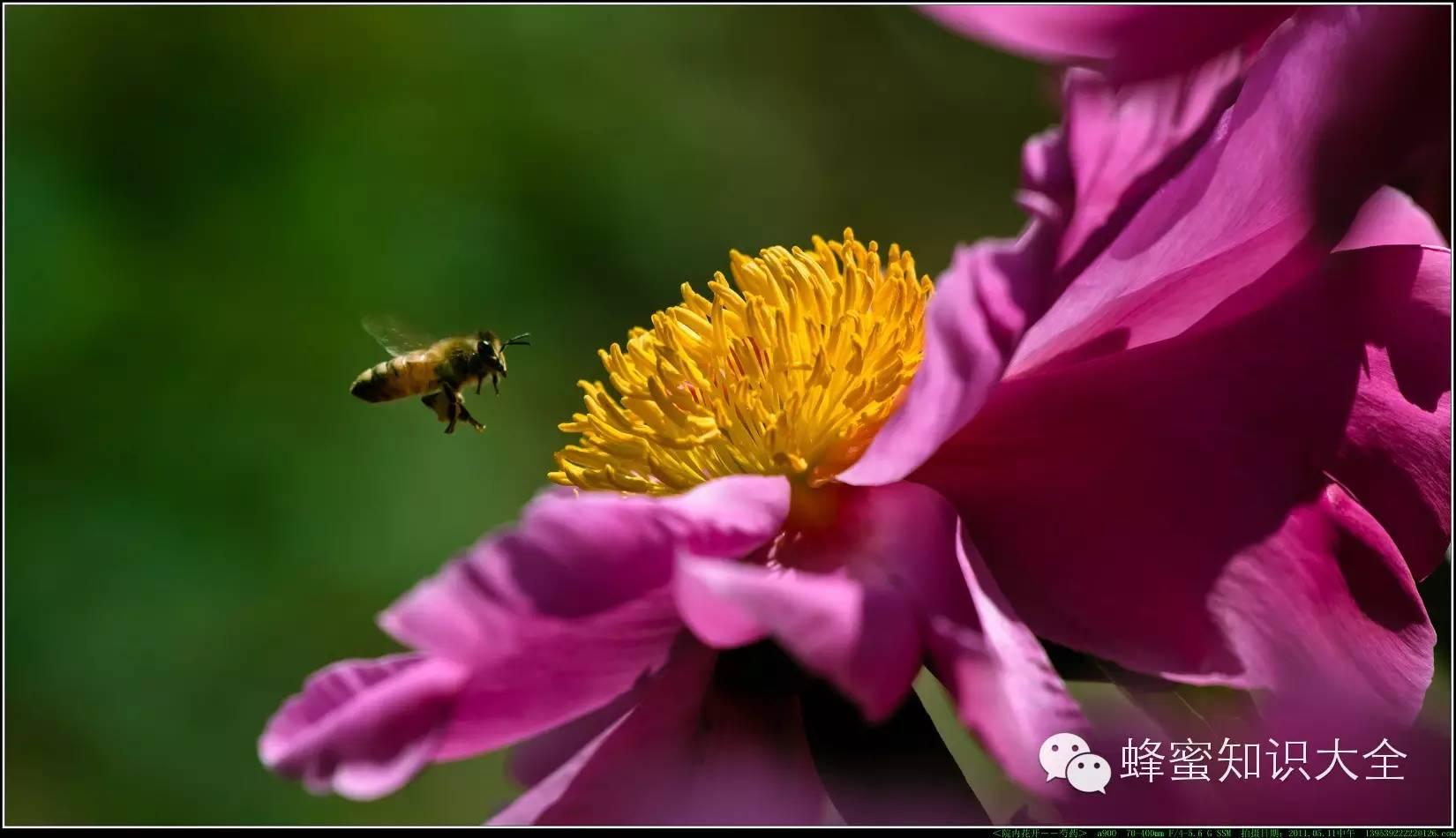 【不得不看】食用蜂蜜普遍10个大错