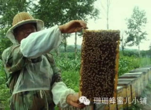 """技术受限成假蜂胶霸市主因 蜂农蜂行业""""受伤"""""""