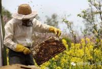 每天吃点蜂蜜对健康有益