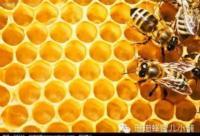 蜜蜂是世界上最勤奋、最伟大、最神奇的动物!
