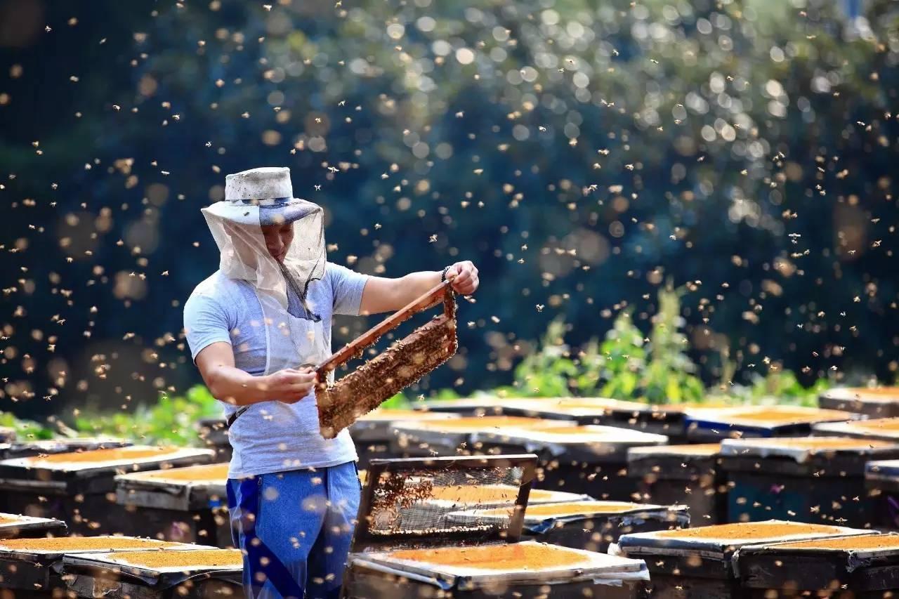 所谓进口蜂胶大部分是假货!第四次全国蜂胶工作会议