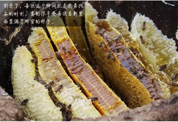 老蜂巢蜜和新蜂巢蜜的区别有哪些