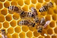 """蜂产品,""""蜂""""靡全世界!"""