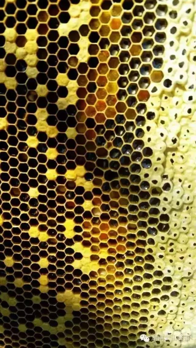 蜂蜜销售渠道 在哪买蜂蜜好 西红柿和蜂蜜做面膜 comvita蜂蜜价格 固体蜂蜜