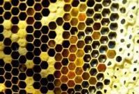 蜂蜜里会有农药吗?