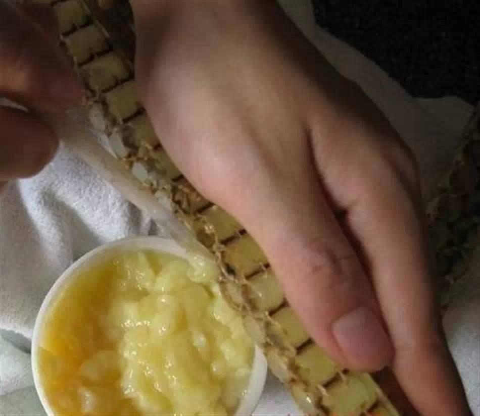【木兰天食养蜂.健康】蜂王浆防止衰老,就是这么任性