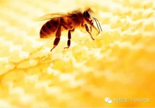 真假蜂蜜怎么区分