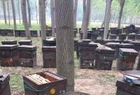 蜂胶可以长期服用吗?