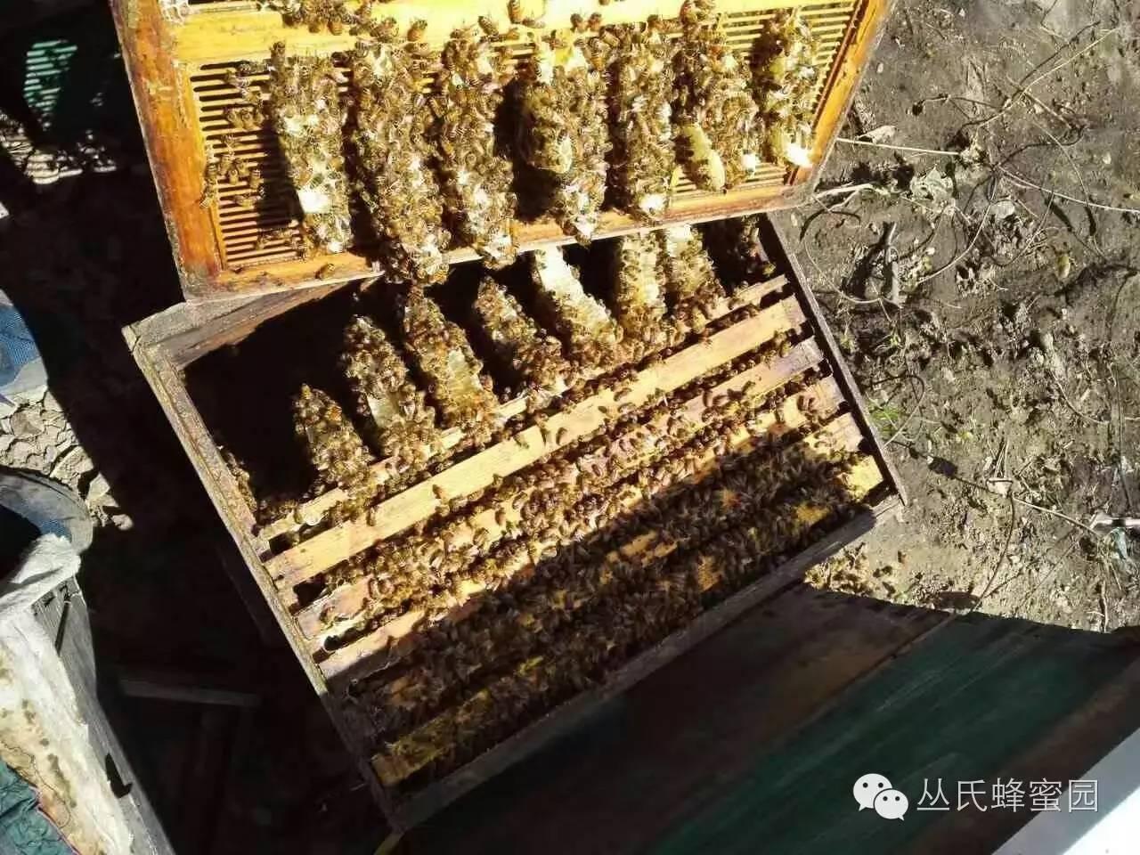 慢性咽炎不可怕,蜂胶来帮您!