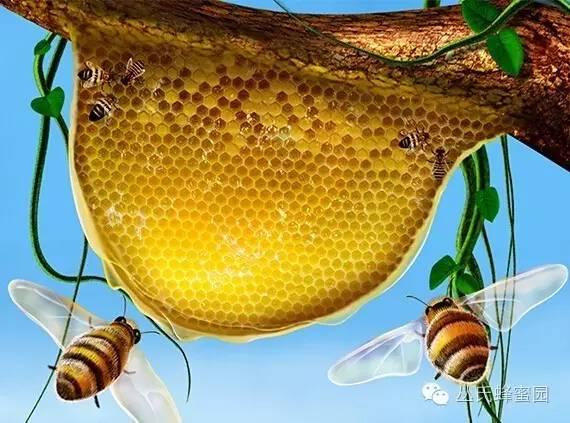 蜂蜜治感冒的小偏方