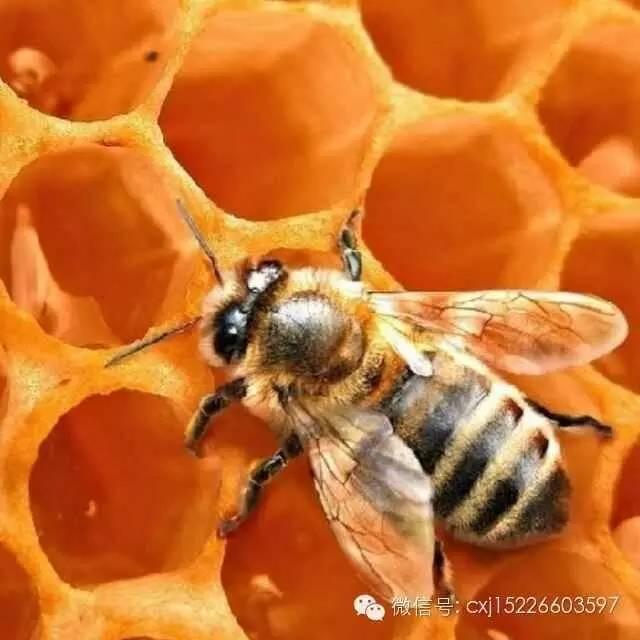蜂蜜柚子茶作用 蜂蜜的好处 蜂蜜水怎么喝 蜂蜜厂家 什么样的蜂蜜最好
