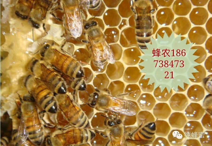 男人吃雄蜂蛹,绝对雄风威武!(胆小者慎入)