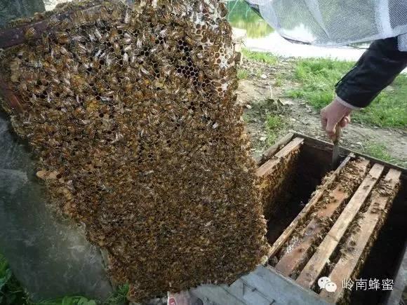 怎么做蜂蜜面膜 哪个牌子的蜂蜜比较好 香蕉与蜂蜜面膜 常喝蜂蜜 红糖
