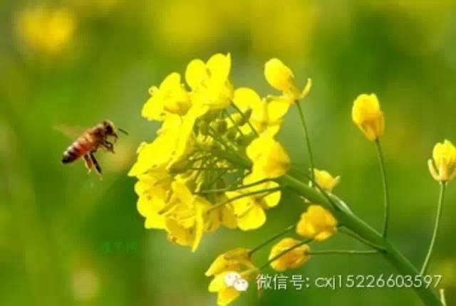 花粉简介(三)