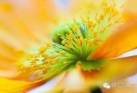涨知识,不同花粉的营养功效特点