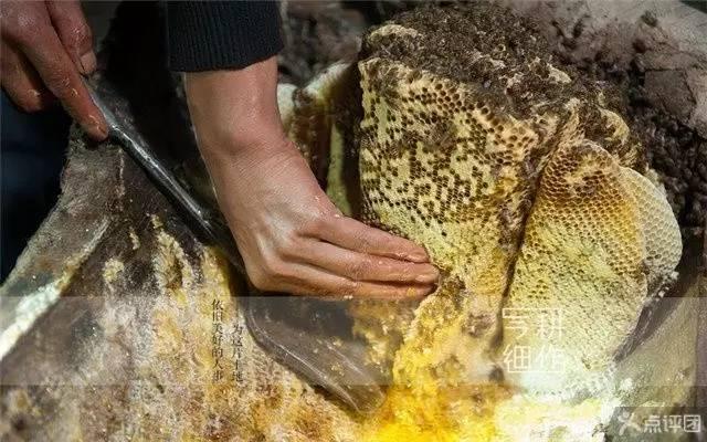 巢蜜-蜜中极品,为您全面介绍巢蜜--送礼佳品