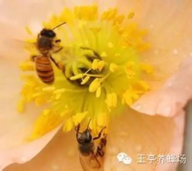蜂蜜多少钱一瓶 蜂蜜如何美容 喝蜂蜜的好处 吃蜂蜜有什么好处 蜂蜜品牌