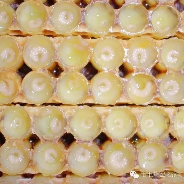 蜂蜜水的作用 荆花蜂蜜 方法 生姜蜂蜜水的作用 蜂蜜的种类