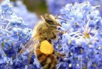解答!花粉的服用方法。
