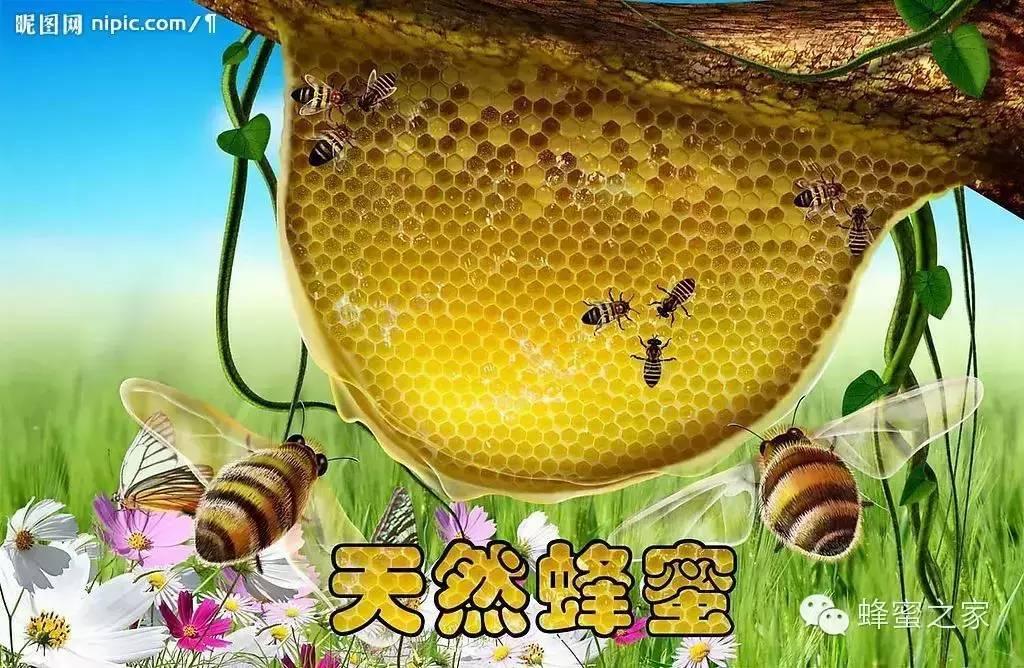 用蜂蜜怎么做面膜 蜂蜜排行 CCD 蜂蜜专卖 蜂蜜品牌