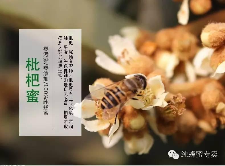 到哪里买蜂蜜 蜂蜜的副作用 蜂群管理 生姜加蜂蜜有什么作用 蜂蜜美白作用