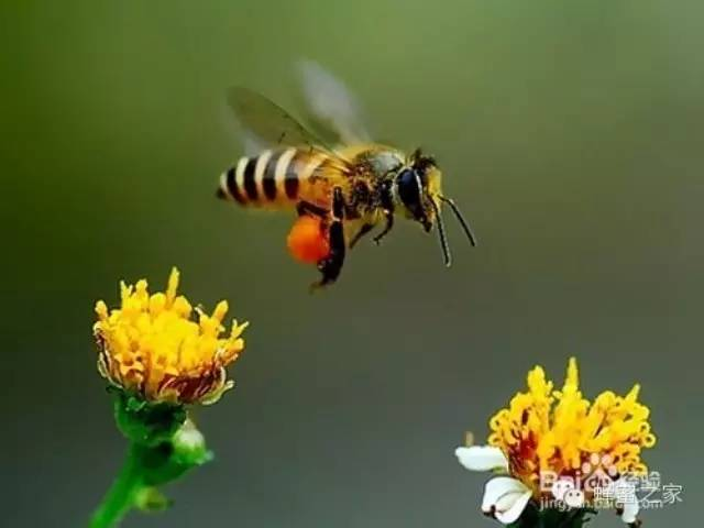 皮肤 蜂蜜真假 蜂蜜 蜂蜜睡眠 得荣蜂蜜