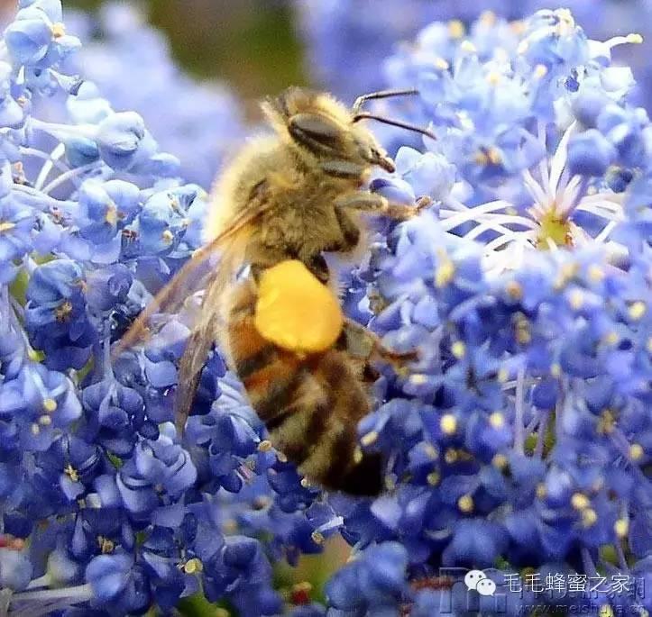 人体 蜂蜜柠檬水的作用 西红柿蜂蜜面膜 蜂蜜去斑法 抵抗力