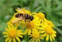 蜂产品与人类健康的秘密,可惜知道的人太少!