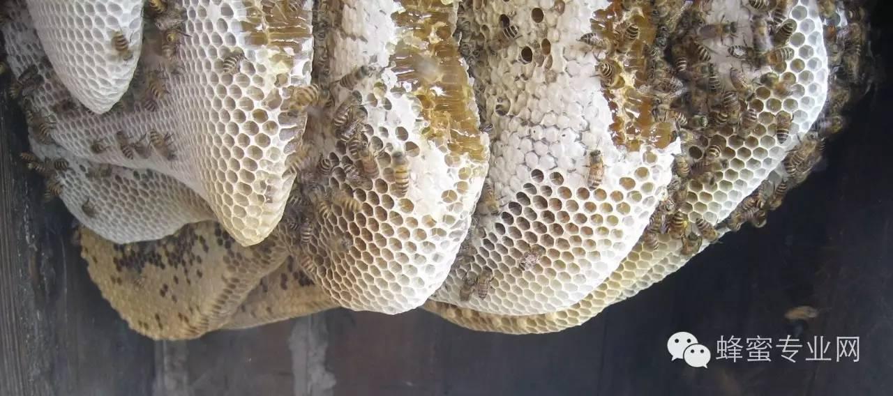 蜂蜜还能食疗,你知道吗?