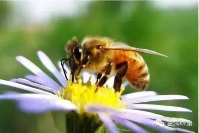 夏天蜂蜜放久了会变质吗?