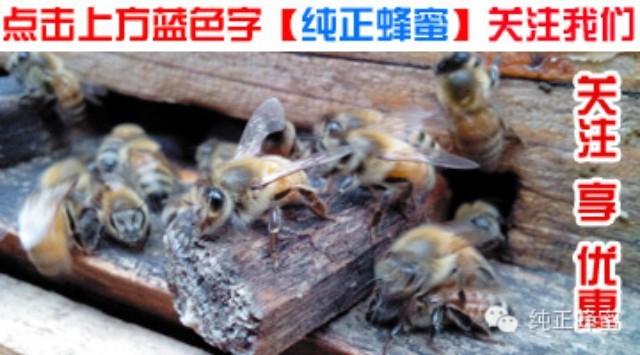 香蕉蜂蜜面膜的作用 吃蜂蜜有什么好处 怎样辨别蜂蜜 野生蜂蜜的价格 蜂蜜进口