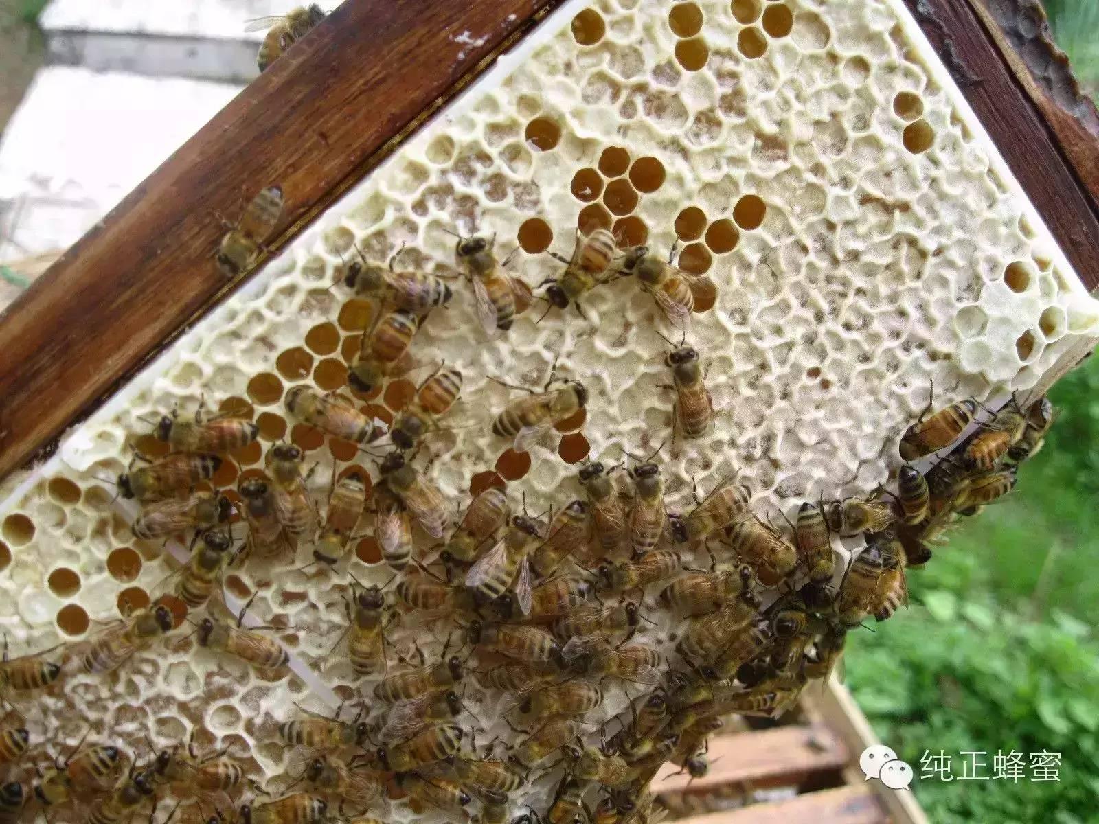 白醋蜂蜜面膜 柠檬蜂蜜祛斑面膜 什么蜂蜜排毒养颜 荔枝蜂蜜价格 蜂蜜能美容吗